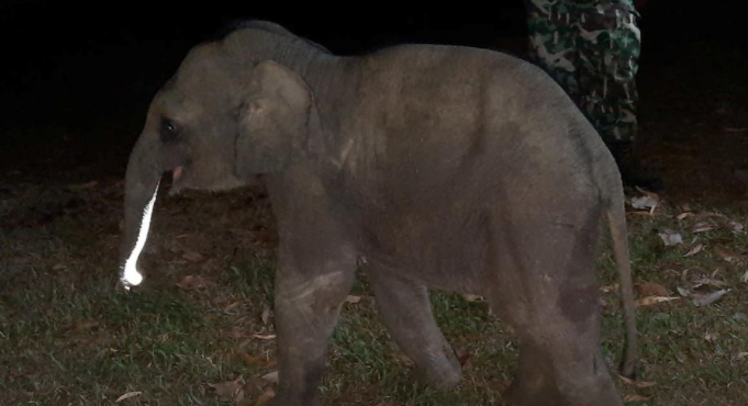 Thai baby elephant hit by motorcycle survives after receiving CPR