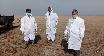 Bird Flu: Health Officials at Himachal's Pong Dam lake