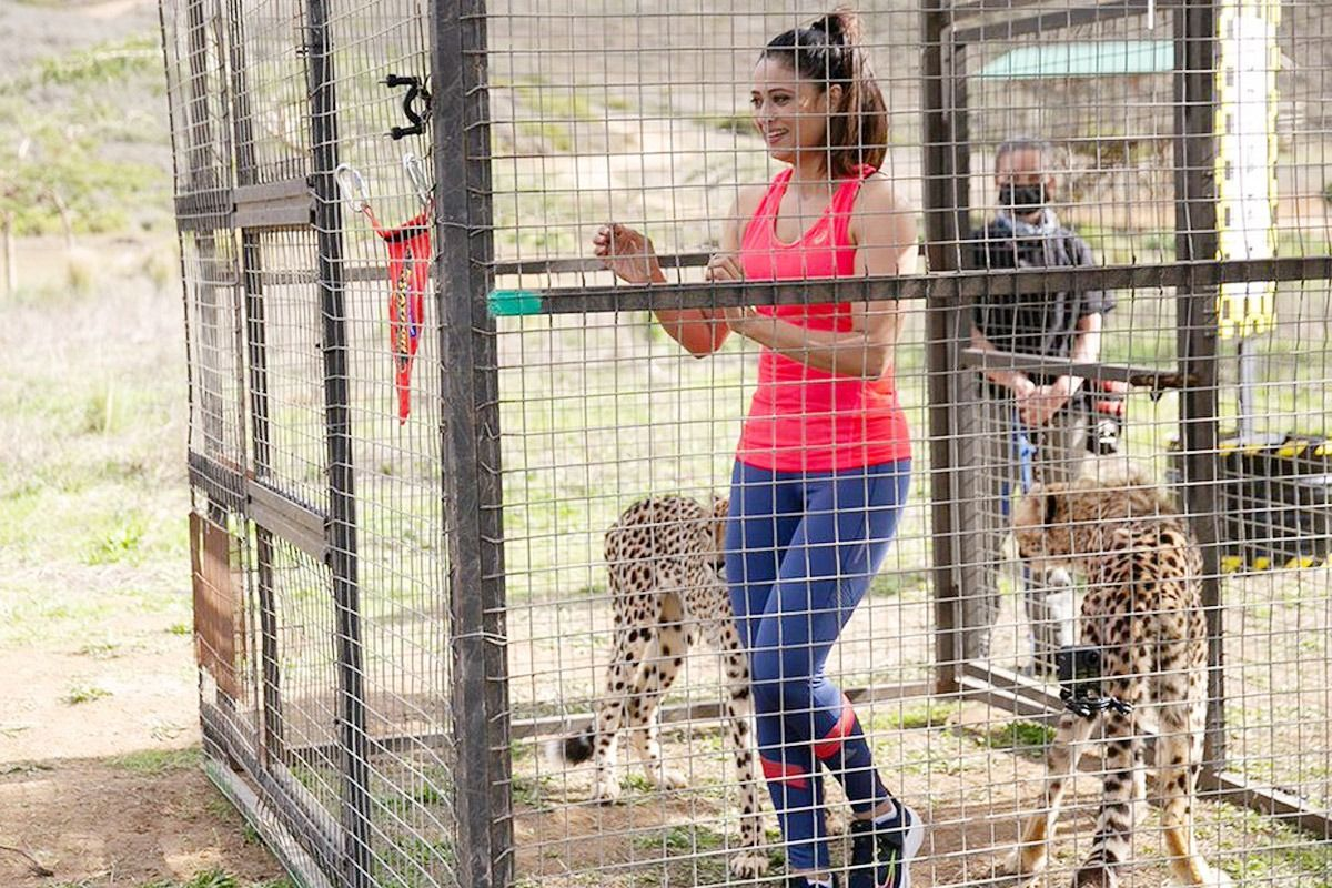 Shweta Tiwari Performs the task
